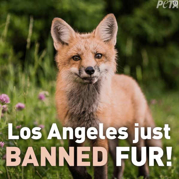 LA Banned Fur